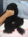Pupu20081028_2