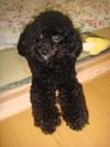 Pupu20081110