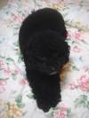 Pupu20081117
