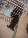 Pupu2009520