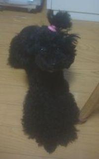 Pupu2011315