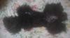 Pupu2011418_2