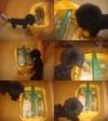 Pupu20118tile