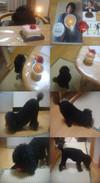 Pupu20125tile