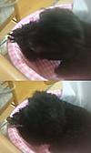 Pupu20127vert
