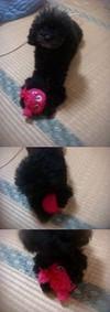 Pupu201212vert